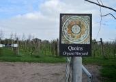 Quoins vineyard, Ashley