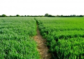 footpath, Sterts Close, Great Ashley, Winsley, Bradford on Avon