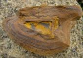 ironstone nodule