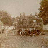 Old Photographs: Farming