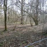 Roy's woodland survey