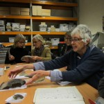 Museum Society members examine pottery in the Roman Baths store
