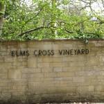 Elms Cross Vineyard