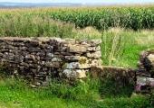 stone stile and maize, Ashley, Bradford on Avon