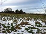 Still a bit of snow