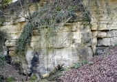 Avoncliff Quarry, Westwood