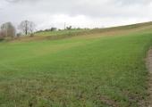 landslip, Turleigh Down